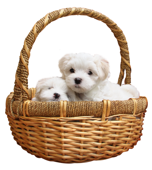 Transparent image pngpix. Puppy png jpg library library