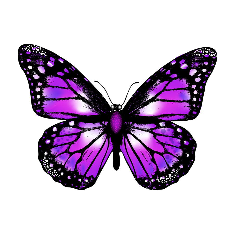 Butterfly png. Vector image transparent background