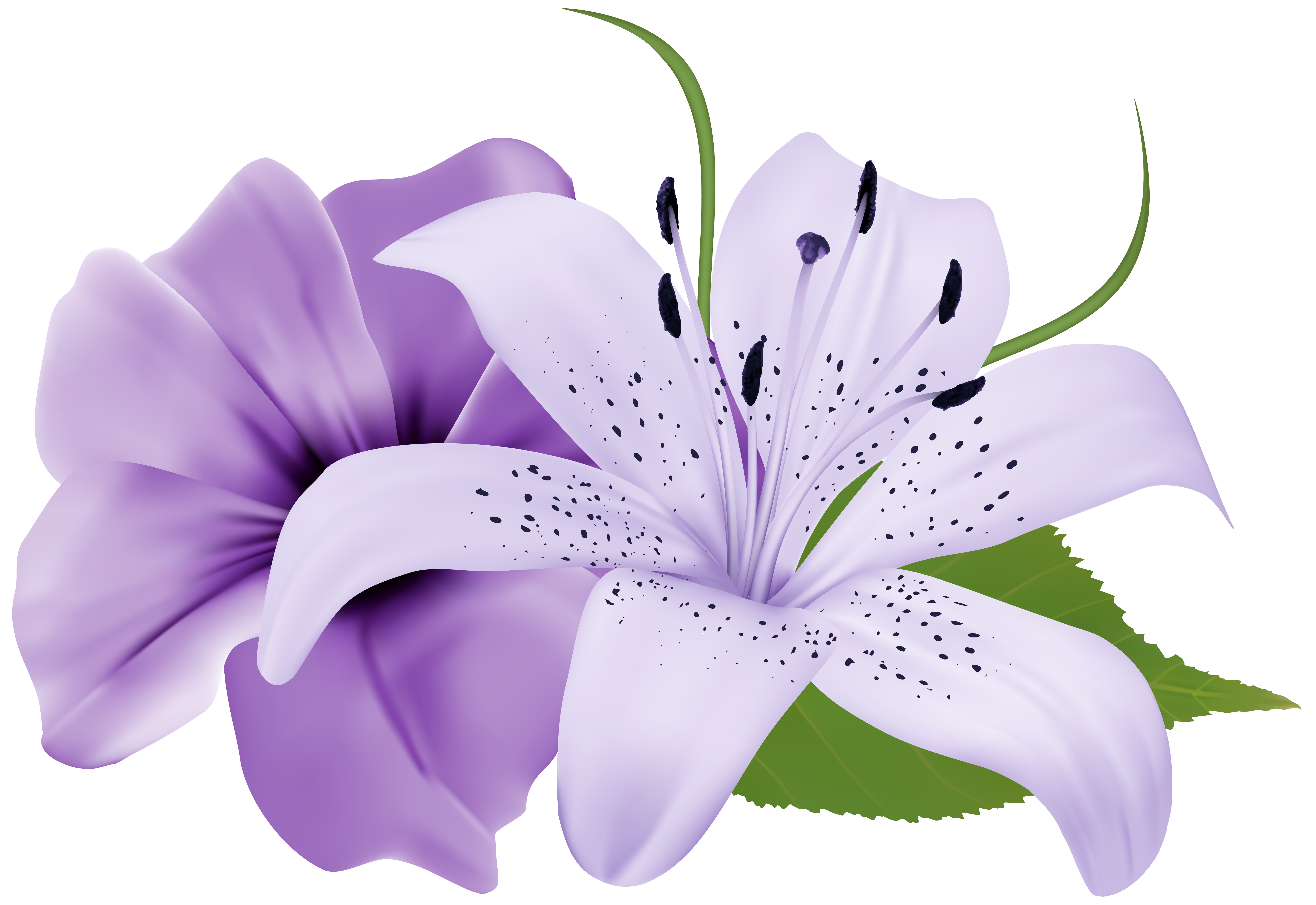 Purple flowers png. Two exotic clipart image