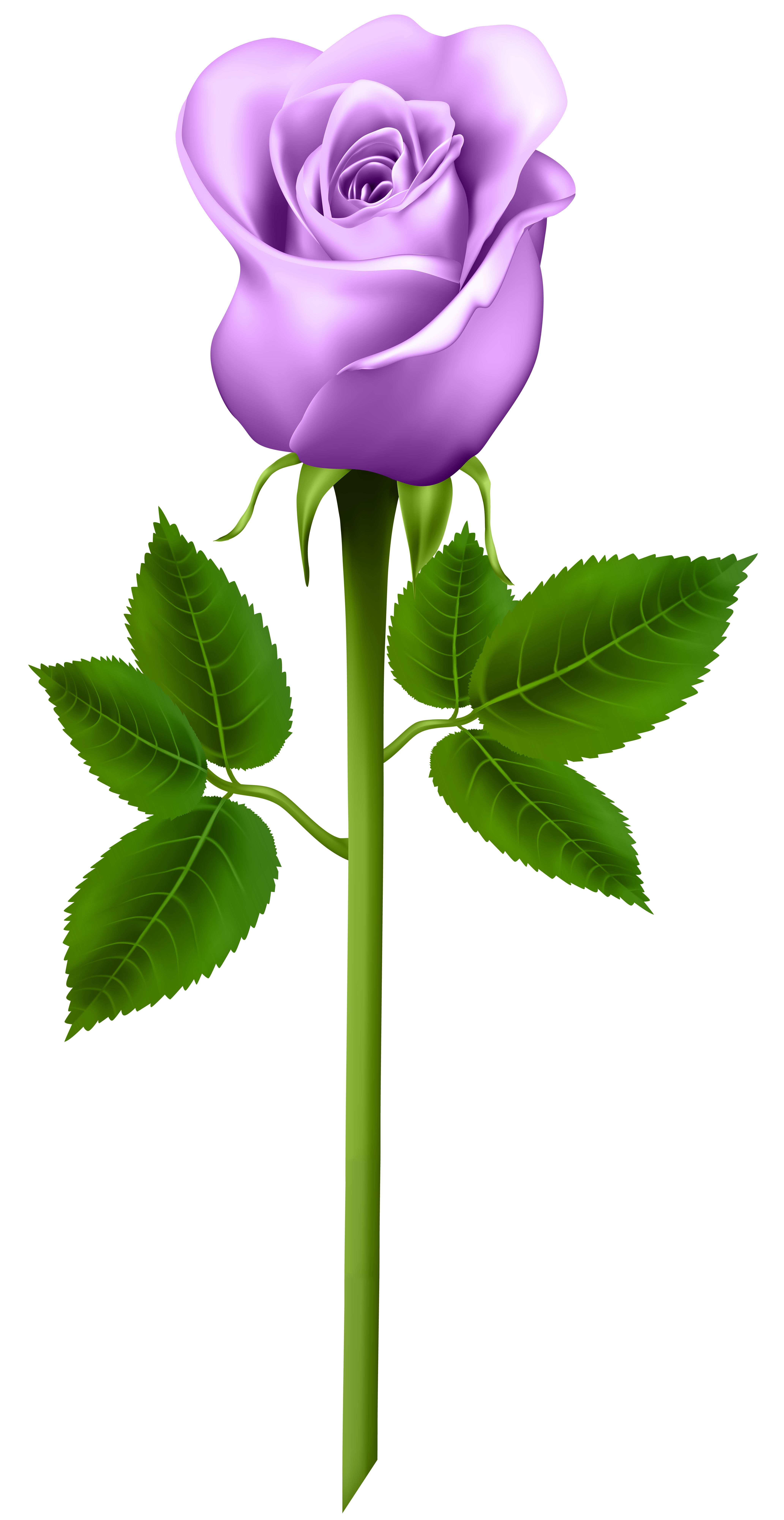 Purple rose png. Transparent image gallery yopriceville