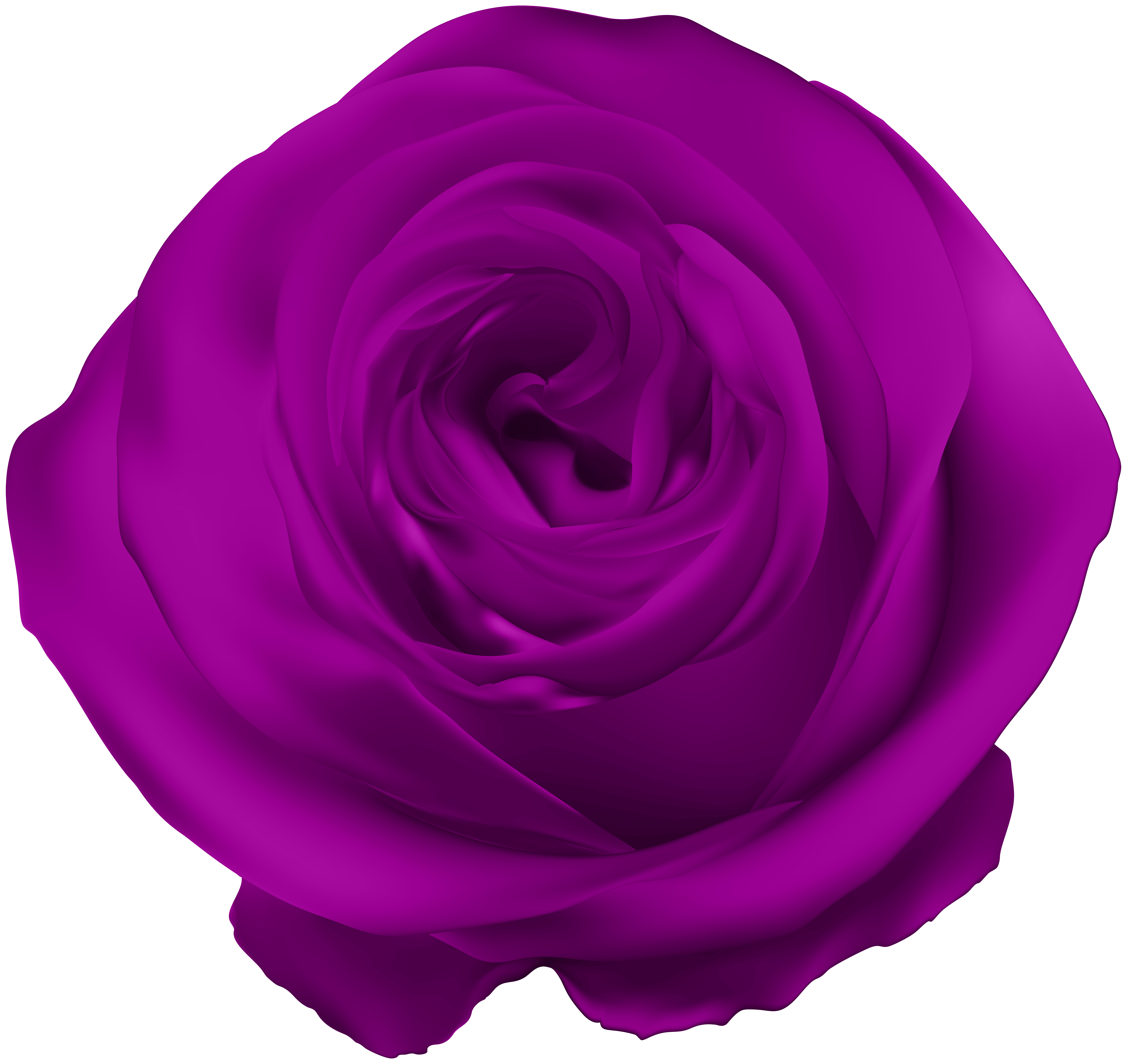 Purple rose png. Clip art gallery yopriceville