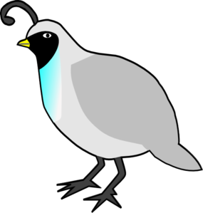 Quail clipart. Cartoon