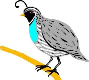 Quail clipart white background. Free cliparts download clip