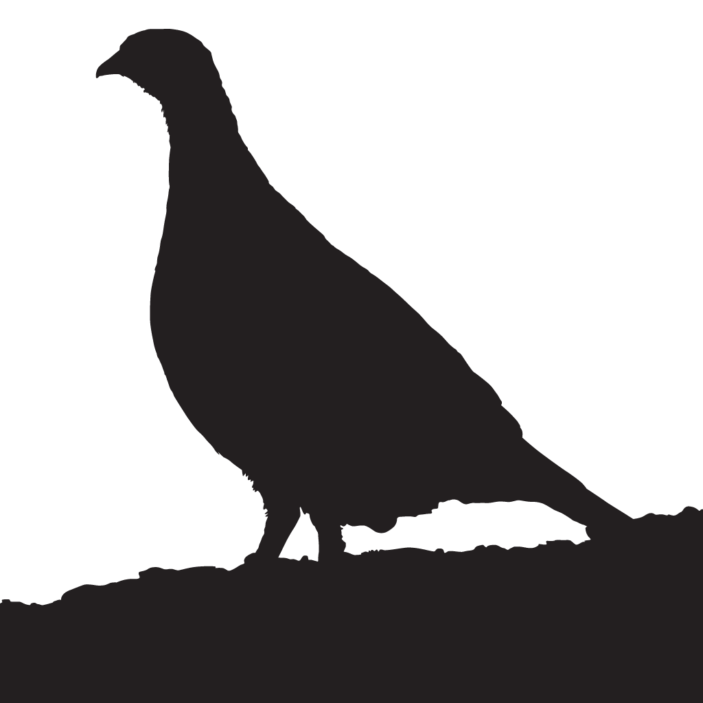Quail clipart white background. Gray partridge overview all