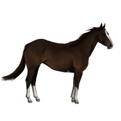 Quarter drawing shiny. Seal brown horse by