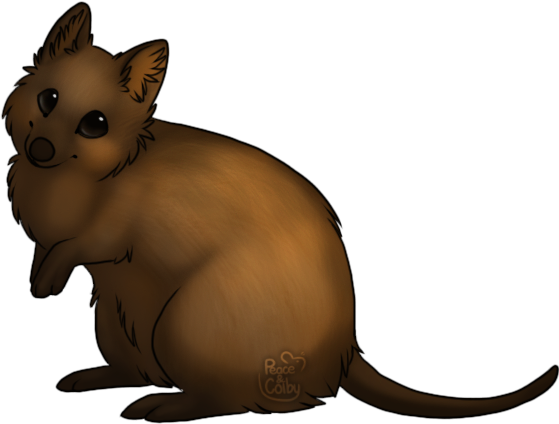 Quokka drawing. Wombat clipart pencil and