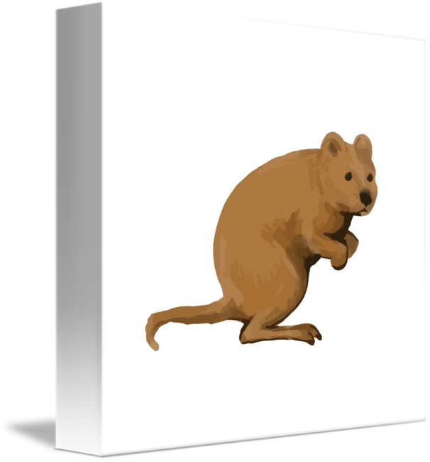 quokka drawing animal australian