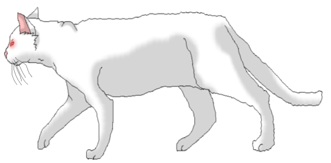 Quokka drawing albino. Abby the cat by