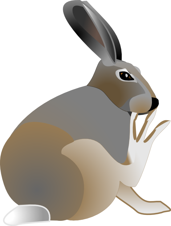 hares drawing mountain hare