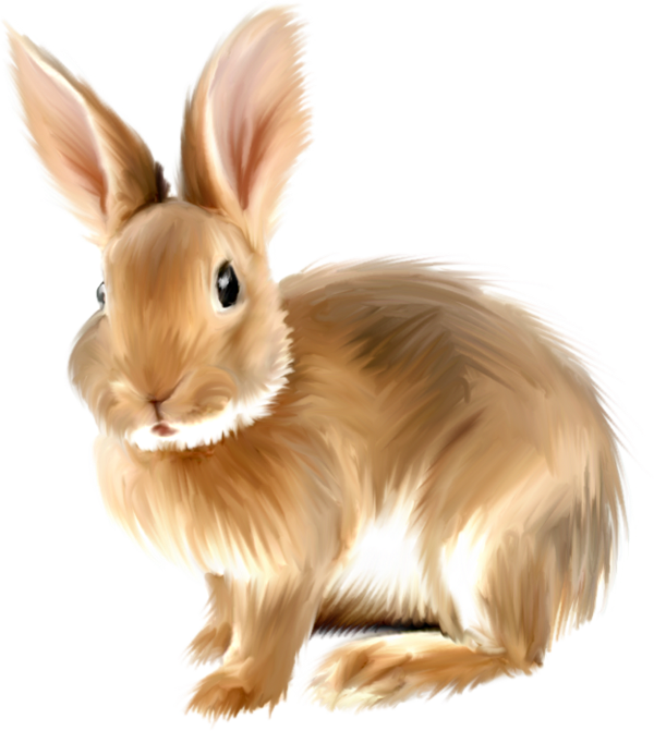 Rabbit . Realistic clipart clip free library