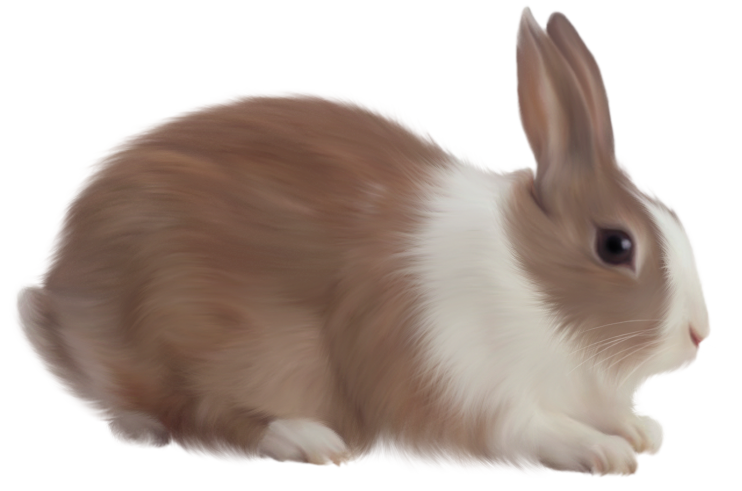 Rabbit png images. Free pictures download image