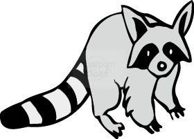Raccoon clipart outline. Clip art black and