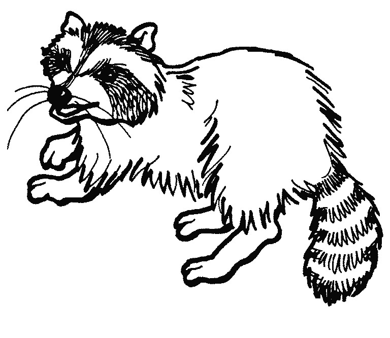 Raccoon clipart outline. Drawing easy at getdrawings