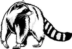 Image result for face. Raccoon clipart outline clip art download