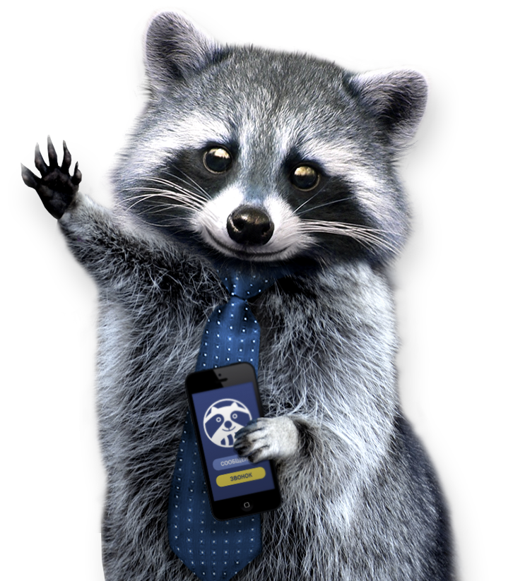 png raccoon