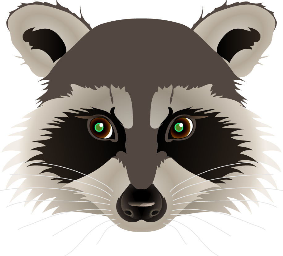 Raccoon head png. Collection of drawing