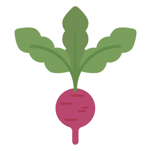 Vector vegetables radish. Design element transparent png