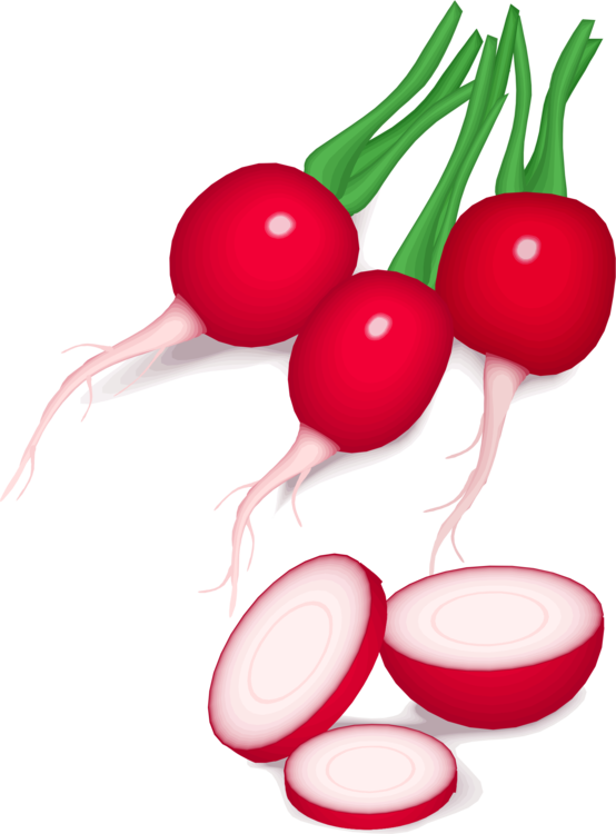 radish vector beetroot