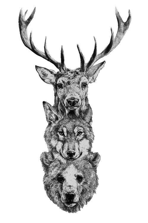 Raindeer drawing portrait. Deer wolf bear ciervo