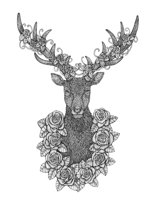 Raindeer drawing portrait. O deer hand drawn