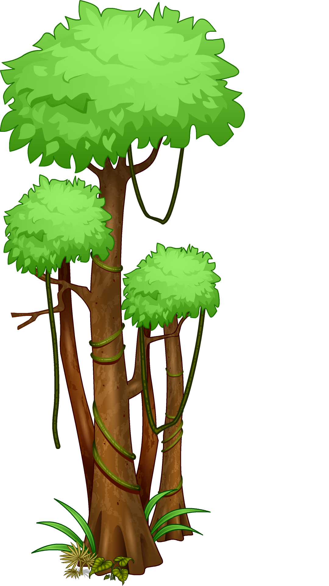 3 vector rainforest tree. Trees clipart at getdrawings