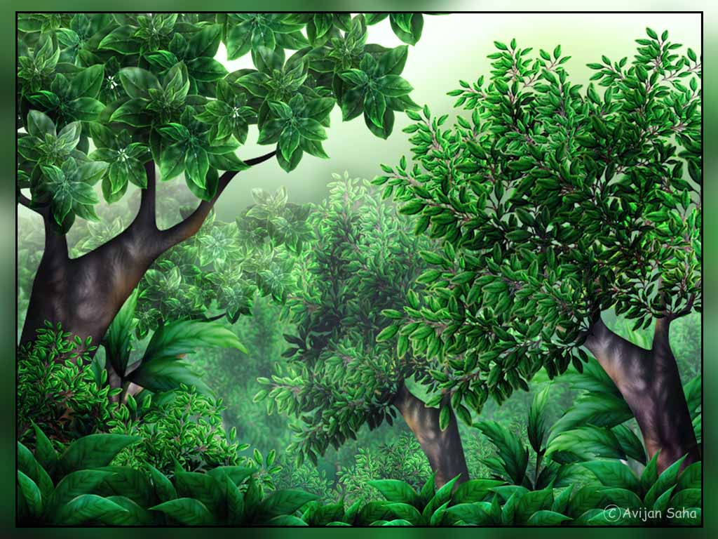 Rainforest forest land