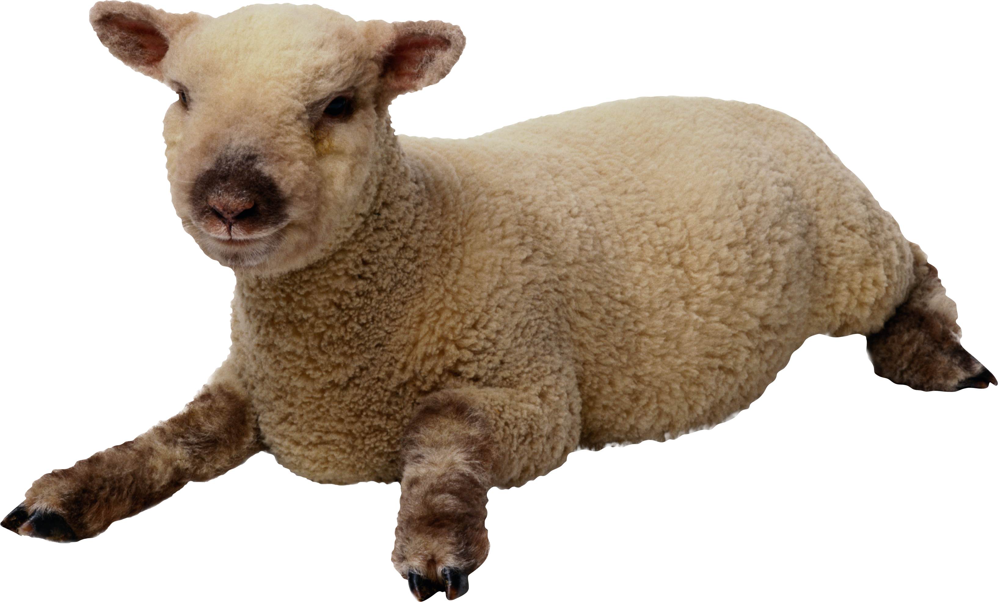 png sheep