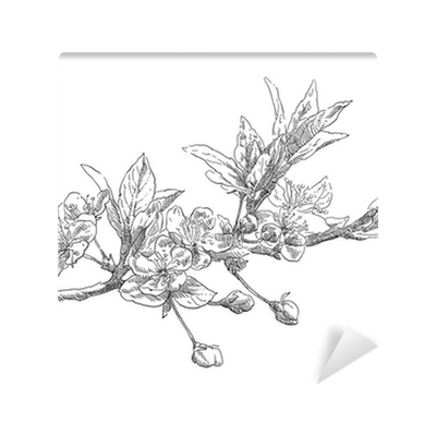 Blossom drawing apple. Hand flower wall mural