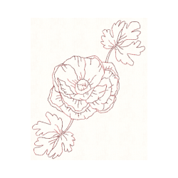 Ranunculus drawing spring flower. Redwork machine embroidery designs