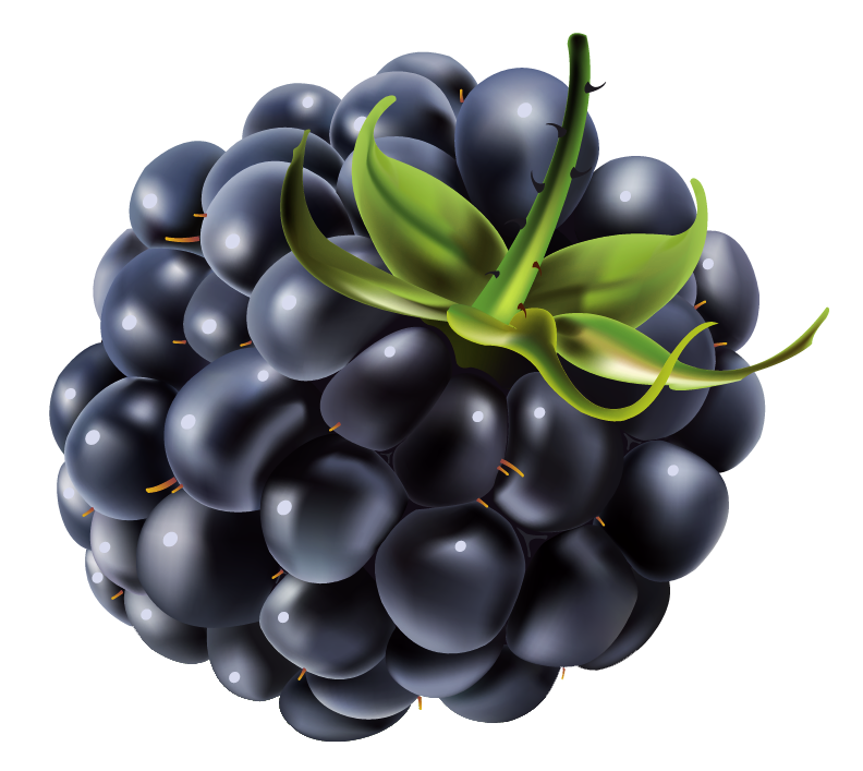 Blackberry fruit png. Raspberry image royalty