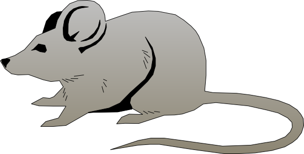 Rat clipart real mouse. Clip art at clker
