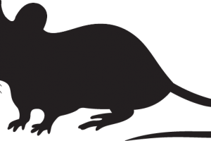 Rat silhouette png. Images in collection page