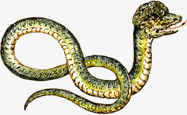 Rattlesnake clipart dangerous snake. Poisonous toxic crawling cold