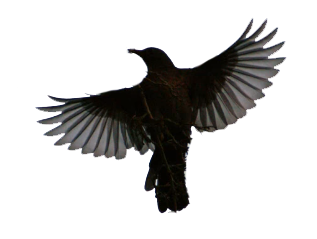 Raven clipart outstretched wing. Pin by rob maxfield