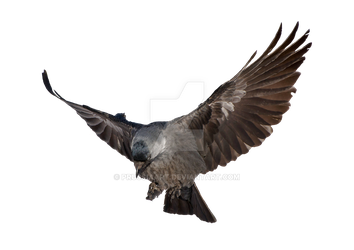 Raven clipart outstretched wing. Prussiaart s deviantart gallery