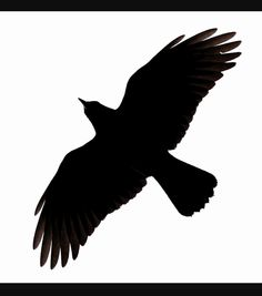 Raven clipart outstretched wing. Phantomrin on mass drawing