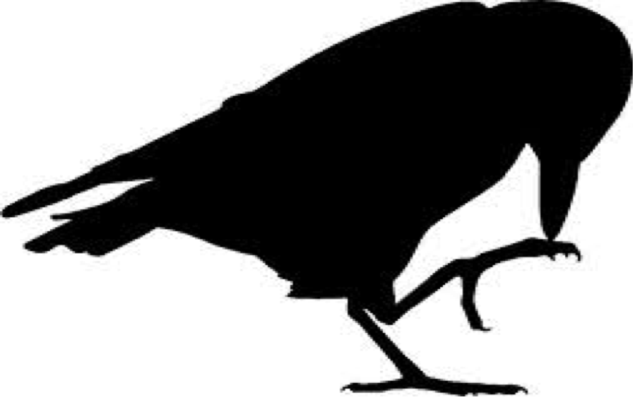 Raven clipart stencil. Bird silhouette at getdrawings