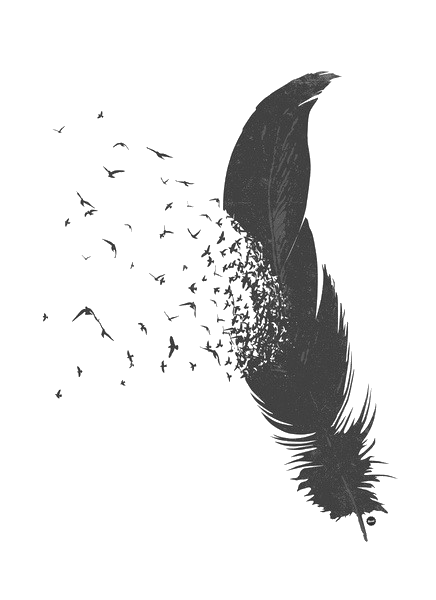 Raven feather png. Ravenfeathers on toyhouse diqggydpng