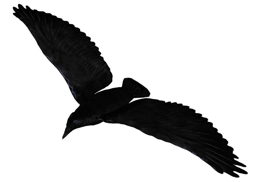 Raven flying png. Pic peoplepng com
