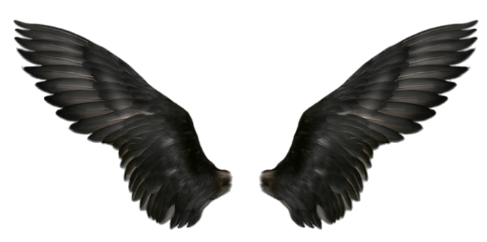 Raven wings png. Image web icons
