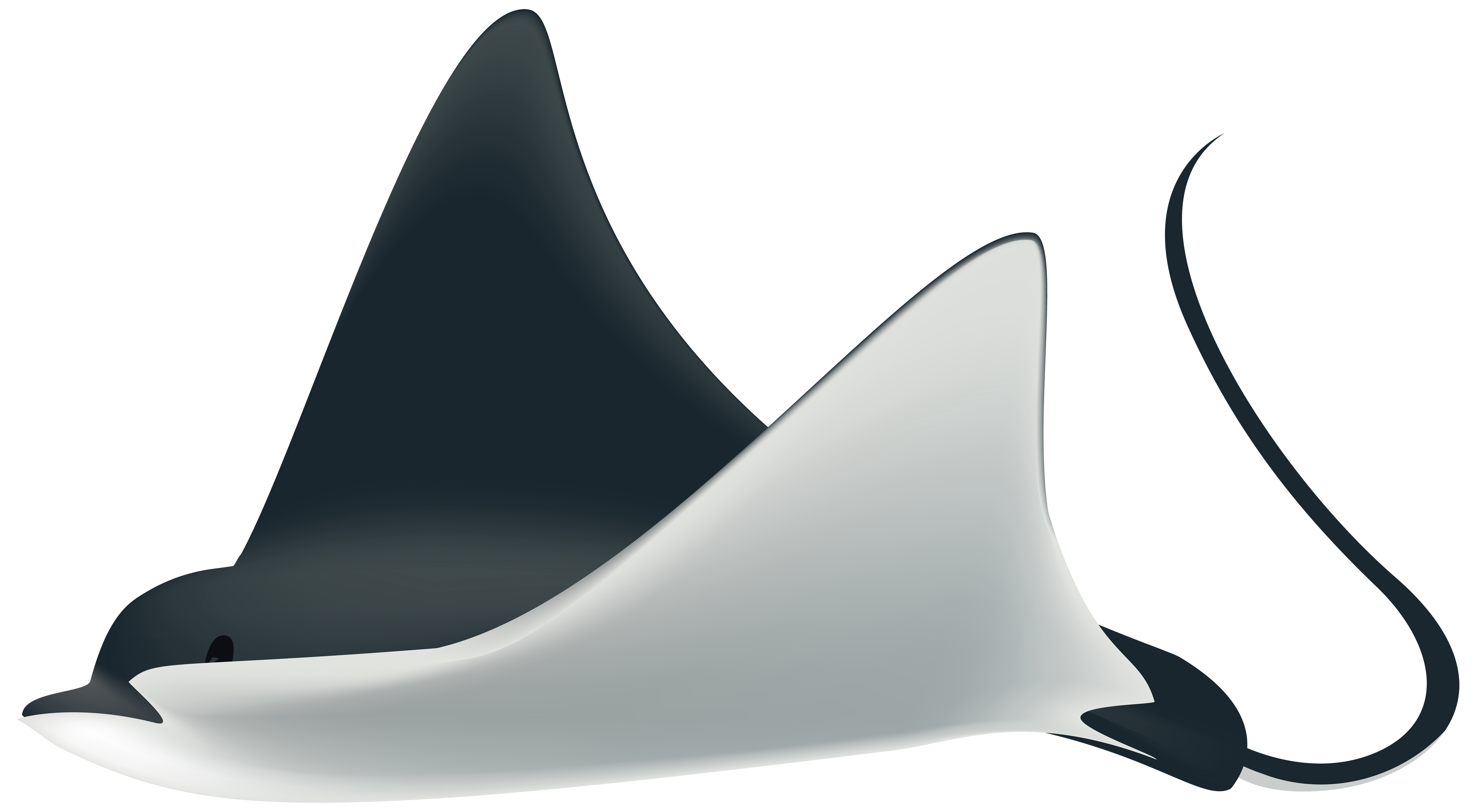 Ray clipart. Fish png transparent clip