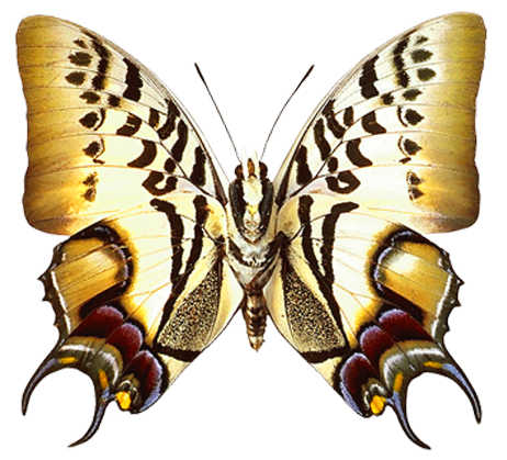 Real butterfly png. Transparent clipart gallery yopriceville