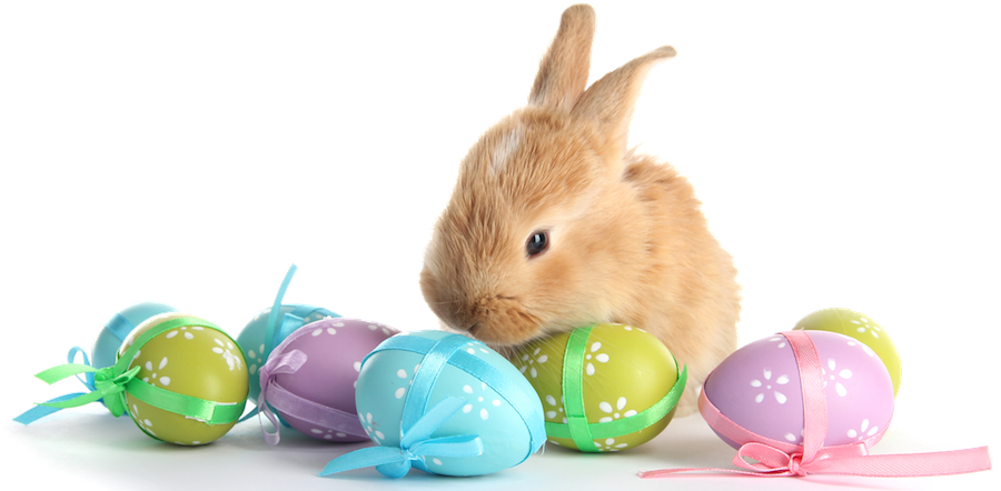 Real easter bunny png. With eggs transparent marges