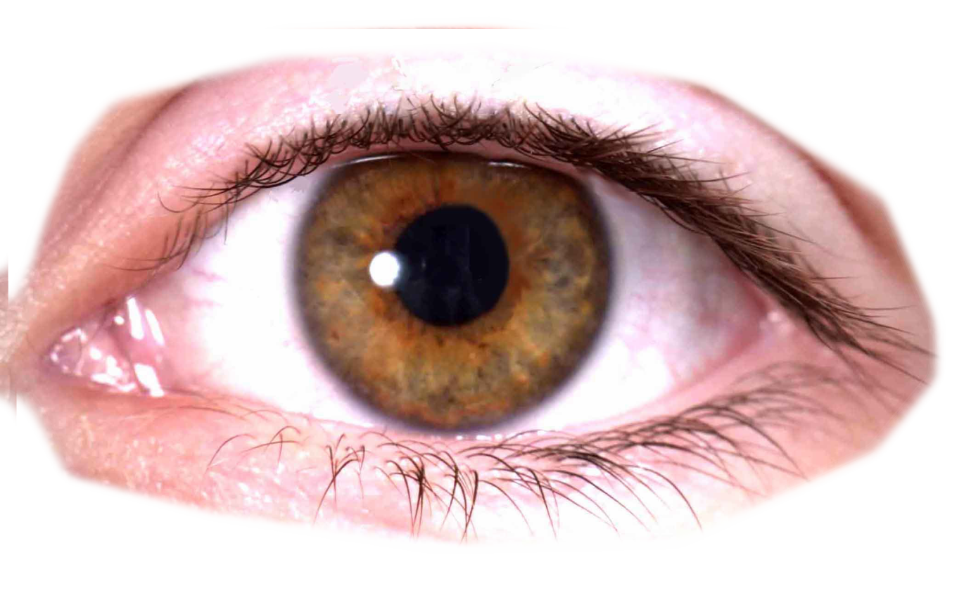 Real eyeball png. Eyes images free download