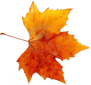 Fall leaves png. Autumn hd transparent images