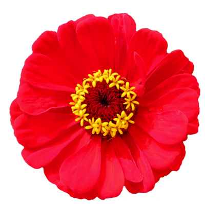 Real flower png. Image gallery useful floral