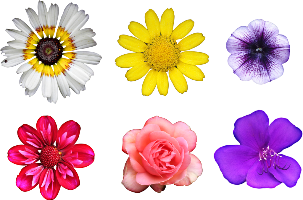 Real flowers png. By hggraphicdesigns on deviantart