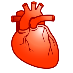 Real heart png. Cardiology plastic xp px