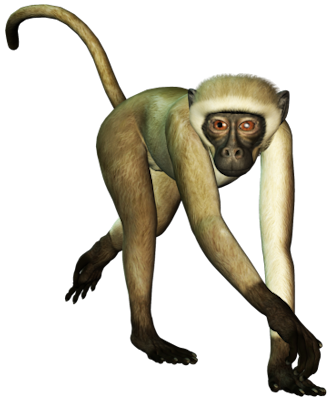 Real monkey png. Transparent images all free