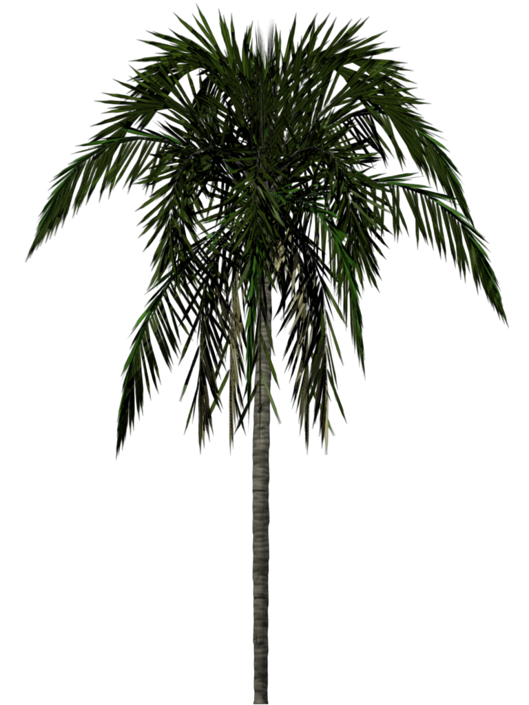 Real palm tree png. Image